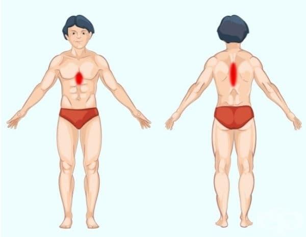 Стомах. Стомашните проблеми причиняват болка в средната част на корема над ребрата и на същото ниво в гърба. Трябва да се отбележи, че стомашните или езофагеални болки често се бъркат със сърдечната болка. В подобен случай само лекар може да ви помогне.