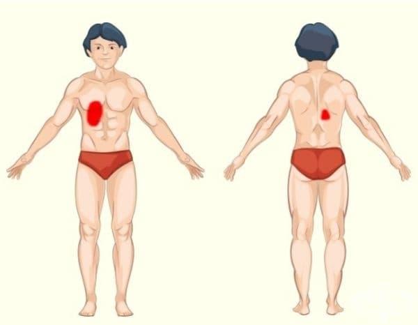 Жлъчен мехур и черен дроб. Проблемите с тези органи могат да причинят болка в горната дясна област на корема и на същото място на гърба. Проблемите с черния дроб също са свързани с широк спектър от симптоми, като кисел вкус в устата и жълтеница.