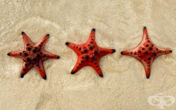 Морска звезда с 6, 5 и 4 пипала.