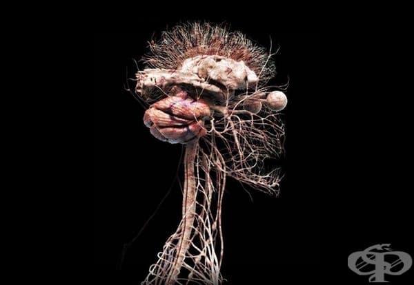 3D модел на човешка нервна система