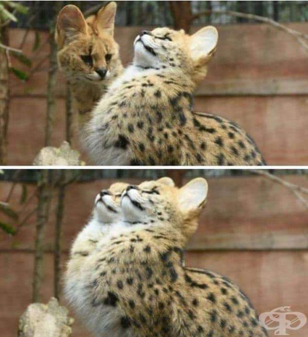 """И аз мога така!"""