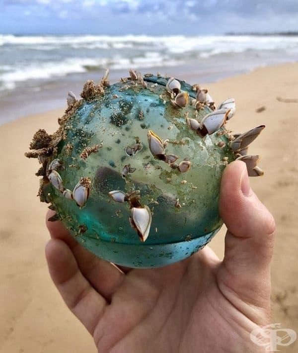 Морски покемон?  Не, това е просто стъклена топка, покрита с мидички.