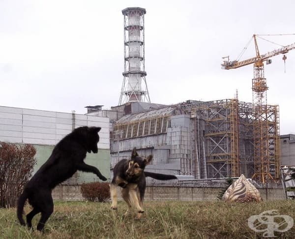 Кучета, играещи си сред руините.