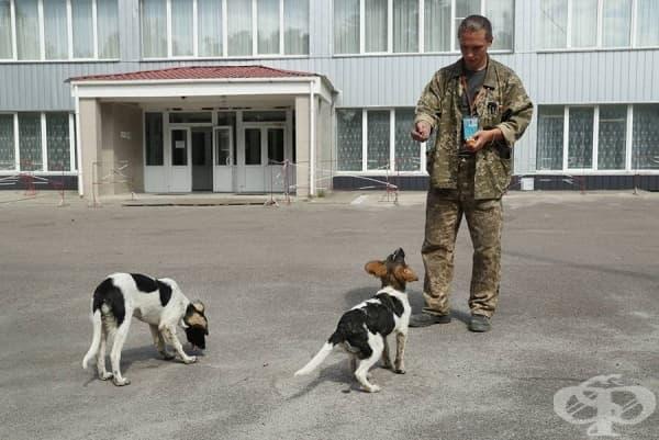 За някои кучета се грижи персоналът, който поддържа купола в Чернобил.