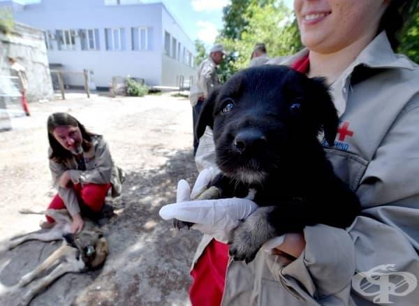 Доброволка преглежда бездомно куче по време на акция на Clean Futures Fund.