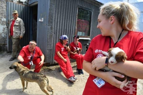Още доброволци на Clean Futures Fund, грижещи се за животните в радиоактивната зона.