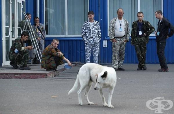 Служители на украинските власти се радват на диво куче по време на почивката си.
