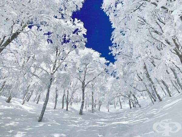 Зимата в Япония изглежда като истинска приказка.