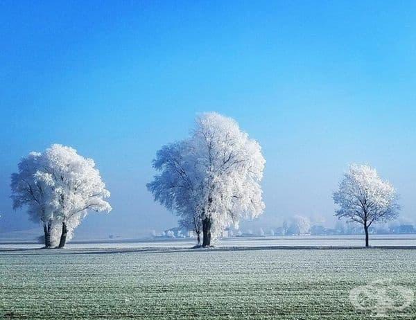 Снежна буря оцвети дърветата дървета в Бавария, Германия.