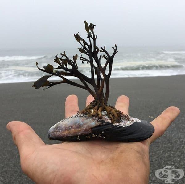 Това е малък, но зашеметяващ естествен океански бонсай.
