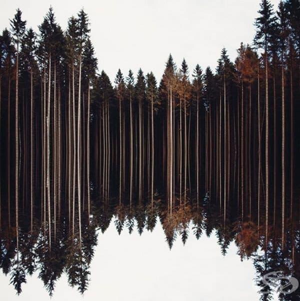 Разбирате ли от къде започва отражението на водата?