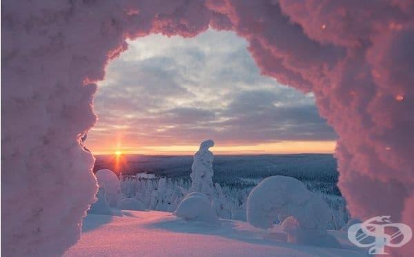 Светът става розов по време на залез сред снежните дървета в Националния парк Riisitunturi във Финландия.