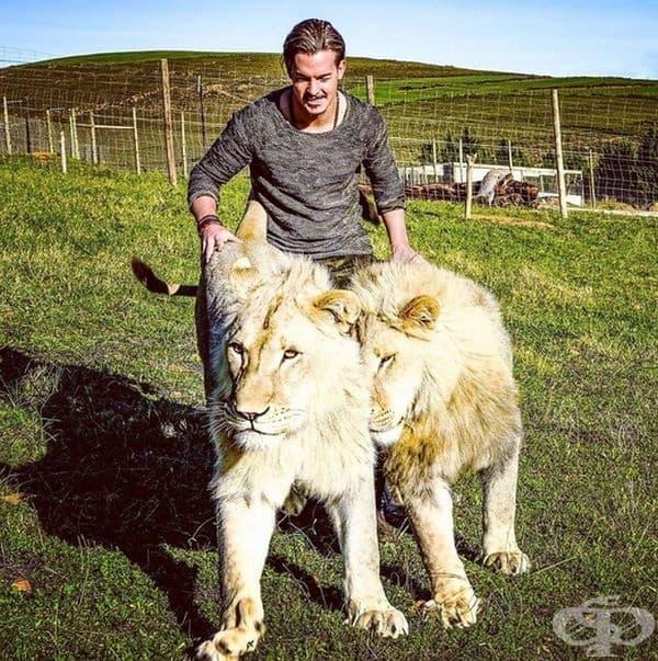 Дий признава, че паркът е бил нападан от бракониери, които са убили пет лъва.