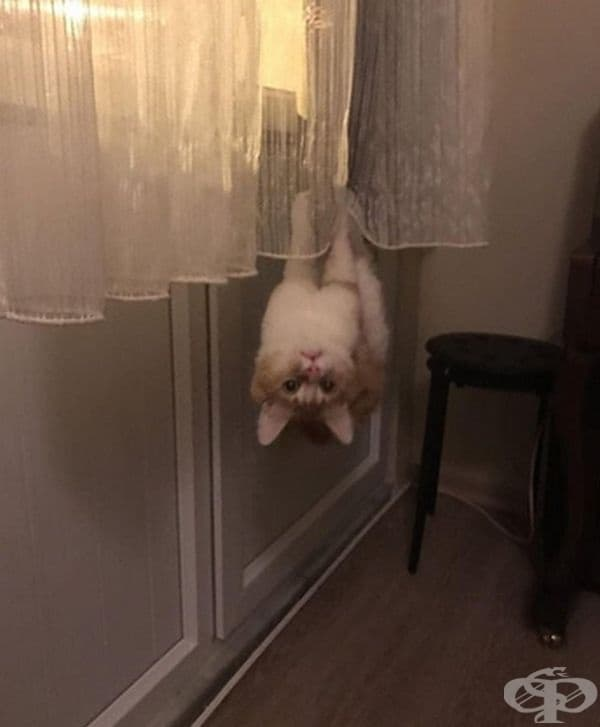 """""""Моля, кажете ми какво не е наред с моята котка?"""""""