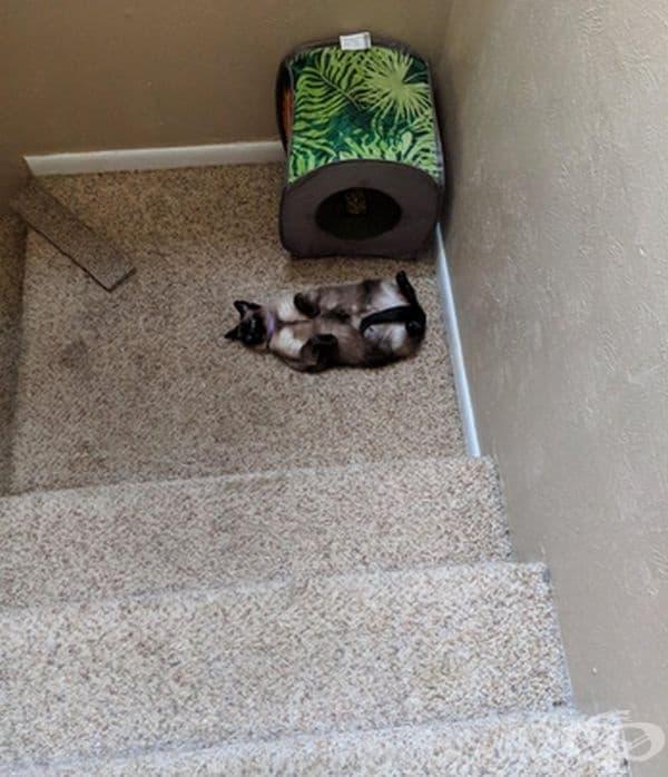 """""""Ето как ме посреща сутрин котката ми."""""""