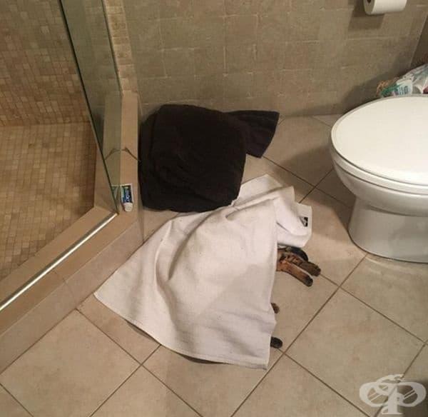 """""""У нас коткта затопля кърпите преди употреба."""""""