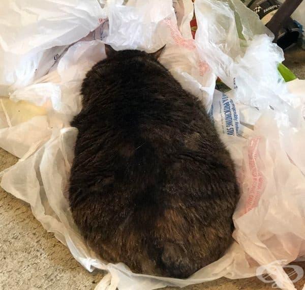 """""""котката ми събра всички найлонови торбички вкъщи, направи си легло и заспа."""""""