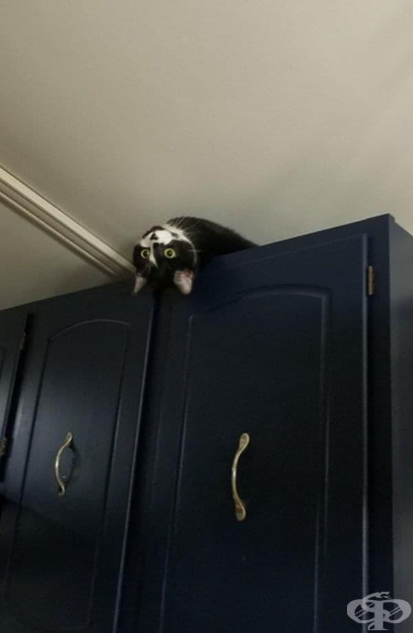 """""""Морф. Това е любимата му поза. От там наблюдава какво се случва вкъщи."""""""