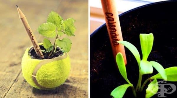 Молив, от който може да порасне растение.