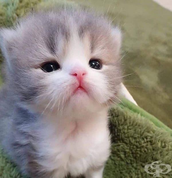 Тези очи!