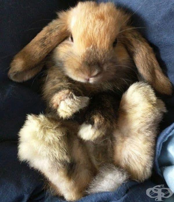 Това зайче очаква масаж по коремчето.