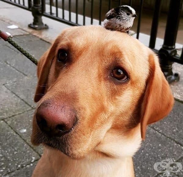Кучето не е бебе, но вече явно може да се грижи за малки пиленца.