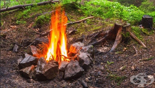 Клонки хвойна. Ако решите да запалите огън, то добавете няколко стръка хвойна, за да отдалечите още повече насекомите.