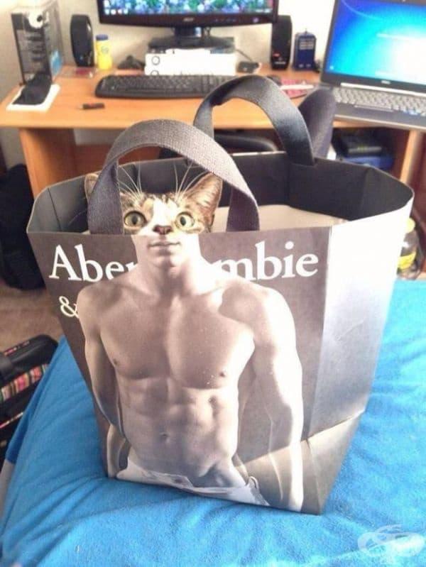 Изглежда, че тази котка е в добра форма.