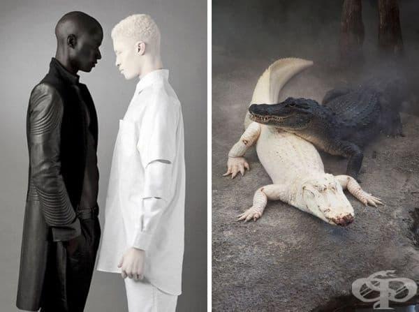 Красотата на албиносите.