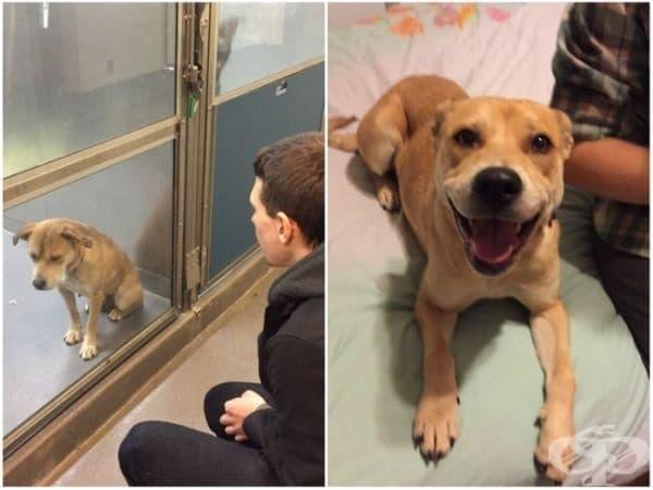 Те осиновиха кученце от приют. Това е разликата, представена само в един ден.