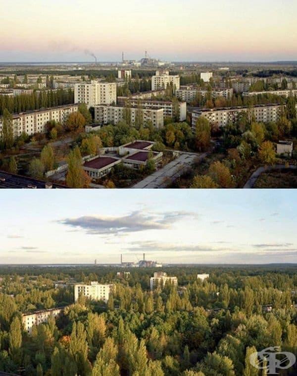 Природата постепенно завзема града.