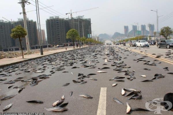 Дъжд от риба в Китай.