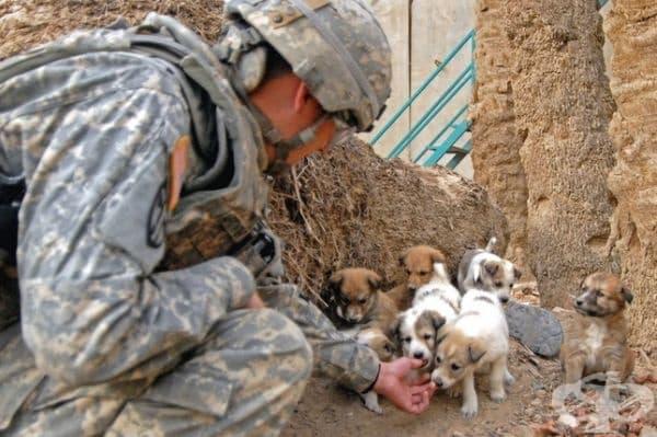 Малки кученца във военна обстановка.