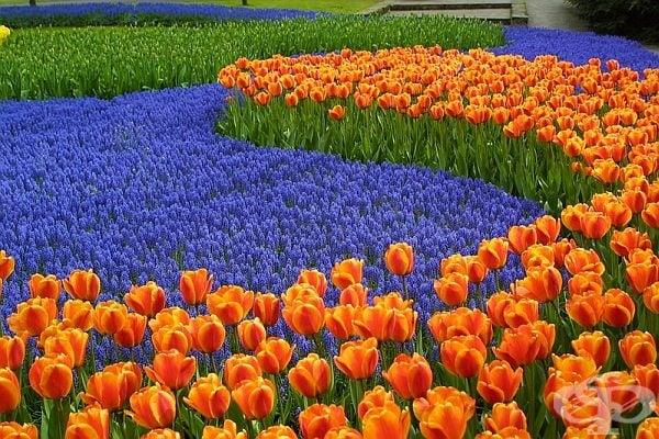 Контрастът на цветовете, изразен чрез цветя.