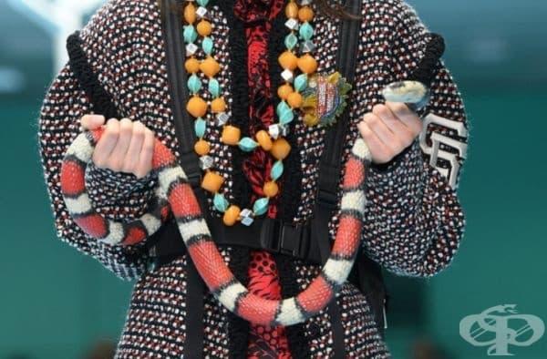 Може да носи със себе си дори и жива змия.