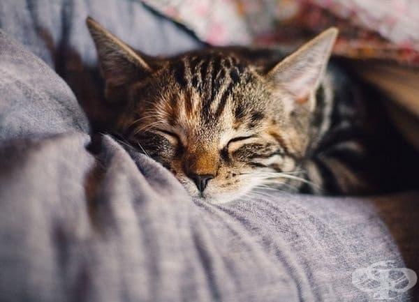 Котките спят около 70% от живота си, което може да е до 16 часа на ден.