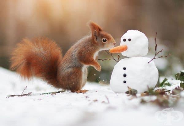 30 очарователни снимки на животни от дивата природа