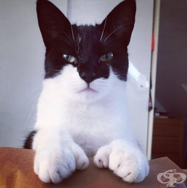 Котка с маска.