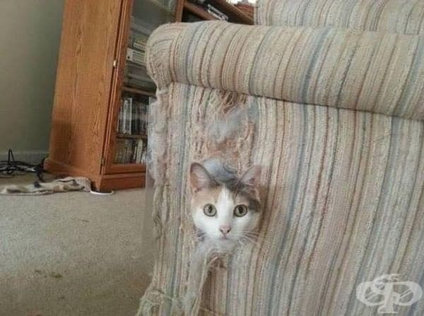 Защо да заобикаля като може да мине през дивана?