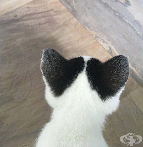 Ушите на това коте са пълни с любов.