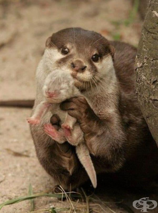 Тези животни показват своите малки, когато са изправени пред опасност, за да провокират чувство на милосърдие в хищника.