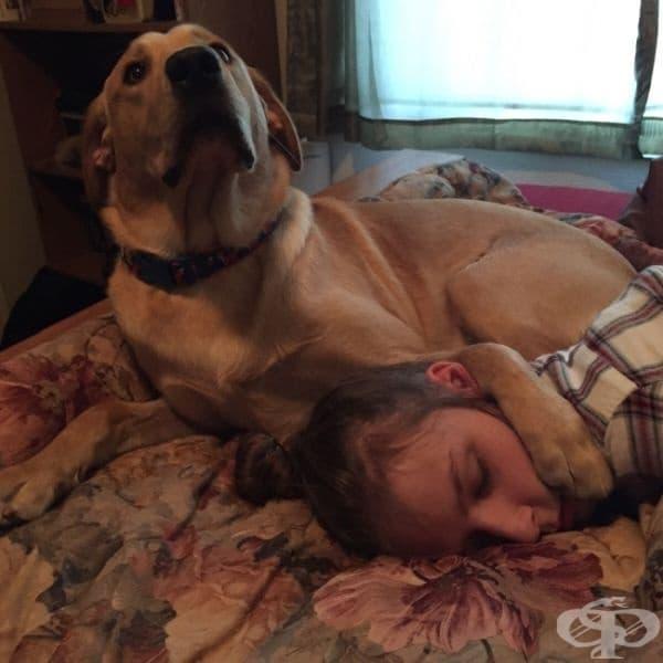 Приятелката ми заспа. Когато се наведох да я целуна по бузата, кучето й ме погледна така: