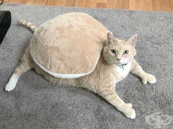 Любимата му възглавница.
