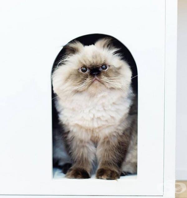 Той винаги е недоволен!
