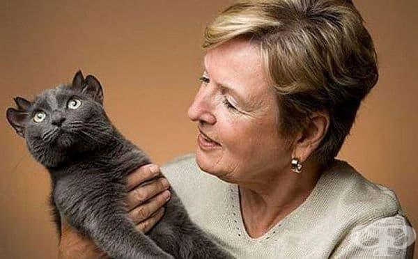 """""""Покрай заведението, което често посещаваме имаше котка, която се сдоби с малки котенца. Собственикът се принуди да пита клиентите дали не искат да им подари малко коте. Тогава забелязахме котето с четири уши."""""""