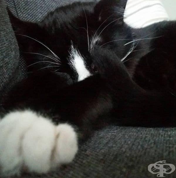 Наложило се е да ги лекува от ушни инфекции и кърлежи, но котките са се чувствали щастливо.