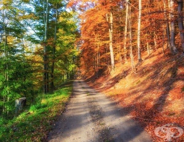 """Есенна гора - изглежда природата е """"изтеглила"""" своя нов външен вид само на 50%."""