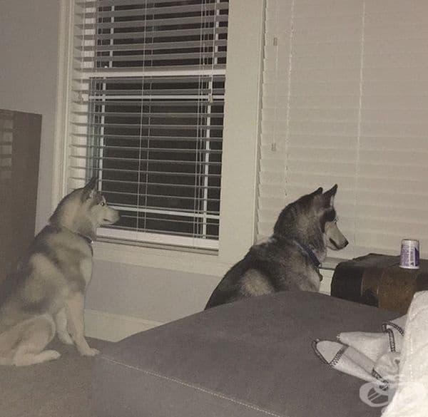 Единият от тях гледа през прозореца, но другият?