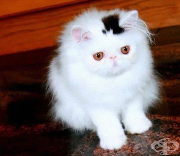Котенце с малка стилна шапка.