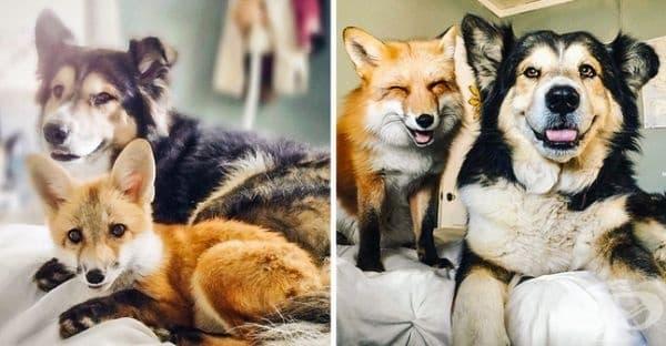 Тези двамата не са ли очарователни?